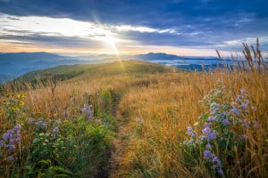 The ancient Blue Ridge Mountains come alive when the morning sun rises over the Roan Mountain Highlands exposing the beautiful wildflowers.